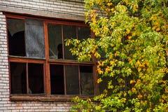 Construção abandonada com janelas quebradas e uma árvore fotos de stock royalty free