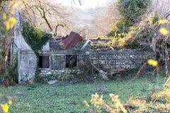 Construção arruinada e abandonada com um telhado desmoronado em um arvoredo das amoras-pretas e da outra vegetação Fotos de Stock