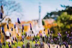 Construção colorida do mosaico no parque Guell Flor violeta da alfazema no primeiro plano Nivelando a luz morna de Sun, Barcelona Imagem de Stock