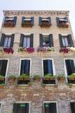 A construção com o petúnia de florescência do rosa floresce em Veneza, Itália foto de stock royalty free
