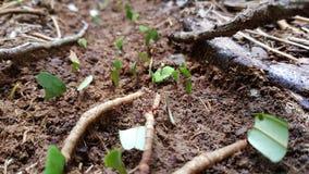 Construção das formigas Fotos de Stock Royalty Free