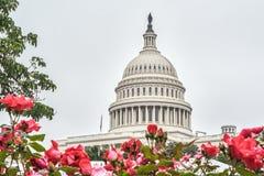 Construção do Capitólio com rosas, Washington DC, EUA fotos de stock