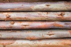 Construção do eucalipto Foto de Stock Royalty Free