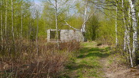 Construção inacabado na floresta Fotos de Stock Royalty Free