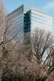 A construção moderna tem o retângulo e as janelas do quadrado formam com o céu azul claro e as árvores Leafless no primeiro plano fotografia de stock royalty free