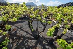 Construção na lava, região dos vinhedos de Lanzarote do vinho de Geria do La, malvasi imagens de stock