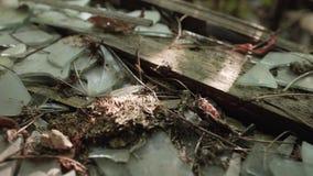 Construção quebrada velha Vidro quebrado na soleira filme
