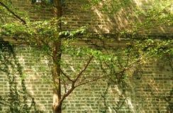 Construção velha da arquitetura do estilo chinês fotografia de stock