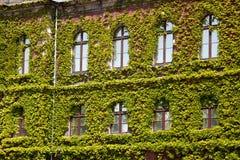 Construção verde velha do arranha-céus com as plantas que crescem na fachada Imagem de Stock