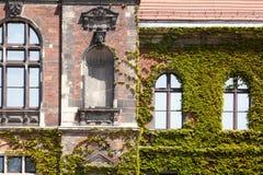 Construção verde velha do arranha-céus com as plantas que crescem na fachada Fotografia de Stock