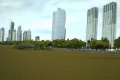 Construções do porto Madero Buenos Aires Imagens de Stock Royalty Free