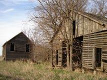 Construções e árvore abandonadas Foto de Stock Royalty Free
