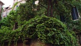 Construções velhas cobertos de vegetação em Veneza, Itália vídeos de arquivo