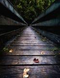 Construa uma ponte sobre a condução na floresta grossa Imagens de Stock