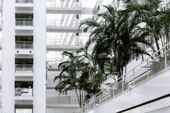 Construcción blanca grande de la palma del cielo azul del edificio de oficinas mucha Den Haag Hague de alta tecnología dentro den foto de archivo