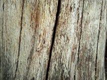 Construcción de madera de la cerca del fondo de madera del árbol de la composición Foto de archivo