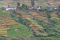 Construcción de terrazas colorida de la cosecha, Sri Lanka Foto de archivo libre de regalías