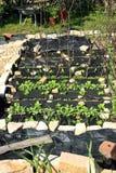 Construcción de un jardín formal de la verdura y de la hierba. Imagen de archivo libre de regalías