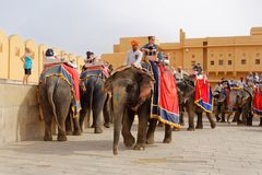 Elephants and mahouts in courtyard of Amber fort India stock images