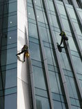 Construction abseilers fix curtain wall of building Royalty Free Stock Image