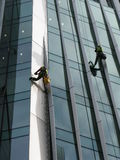 Construction abseilers fix curtain wall of building Stock Images