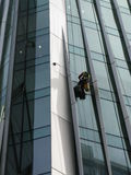Construction abseilers fix curtain wall of building Stock Image