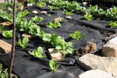 Construction d'un jardin formel de légume et d'herbe. Photographie stock libre de droits