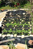 Construction d'un jardin formel de légume et d'herbe. Image libre de droits