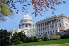 Construction de Capitol Hill avec l'arbre, Washington DC. Photo stock