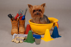 Construction dog. Yorkshire terrier dog sitting in kid construction hat Royalty Free Stock Image