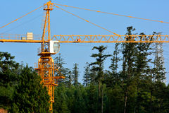 Construction in forest Stock Photo