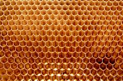 Bee honeycomb stock images