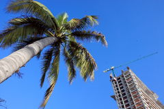 Construction site and palm. Tree in tropical area Stock Image