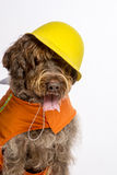 Construction worker dog Stock Photo