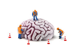 Construction workers on brain. Concept image of miniature construction workers inspecting a brain. There are small caution cones around the brain. White Royalty Free Stock Photos
