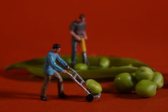 Construction Workers in Conceptual Food Imagery With Snap Peas Royalty Free Stock Images