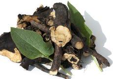Consuelda; Común; medicinal, raíces Imagen de archivo libre de regalías