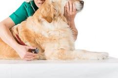Consulta veterinaria Fotografía de archivo