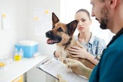 Consultazione del veterinario fotografia stock