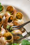 Consume snails fried in garlic sauce Stock Photos