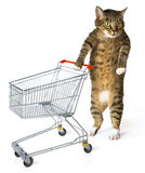 Consumer cat. With shopping cart on white background Royalty Free Stock Photos