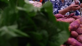 Consumer selecting sweet potatoes at the supermarket in Slow Motion.  stock video