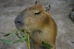 Consumición animal Imagen de archivo libre de regalías