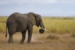 Consumición apacible del elefante Imagen de archivo