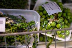 Consumición a comprar en un supermercado vietnamita imágenes de archivo libres de regalías