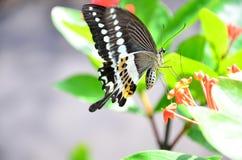 Consumición de la mariposa Imágenes de archivo libres de regalías