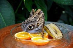 Consumición de la mariposa Foto de archivo
