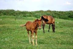 Consumición de los caballos Imagen de archivo libre de regalías