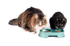 Consumición de los gatos Foto de archivo libre de regalías