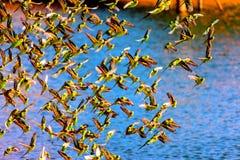 Consumición de los pájaros de un waterwhole Fotografía de archivo libre de regalías